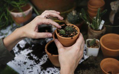 Ako na záhradu s ekzémom